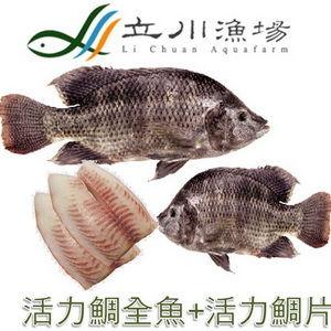 立川漁場-活力台灣鯛(全鯛x8+鯛片x8)超值組