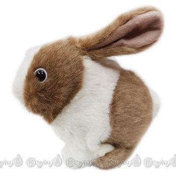 【IWAYA】長耳兔
