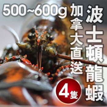 【陸霸王】加拿大直送波士頓大龍蝦(500g-600g/隻)4隻組