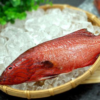 【築地一番鮮】峇里島野生紅鰷石斑魚10條組(每條重200~250g)-型網