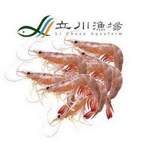 【立川漁場】生產履歷無毒甜蝦超值組合 9件組