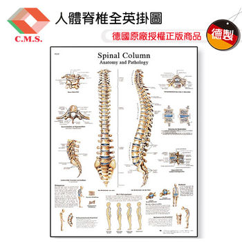 【宇祥國際】人體脊椎全英掛圖(3B德製)