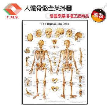 【宇祥國際】人體骨骼全英掛圖(3B德製)