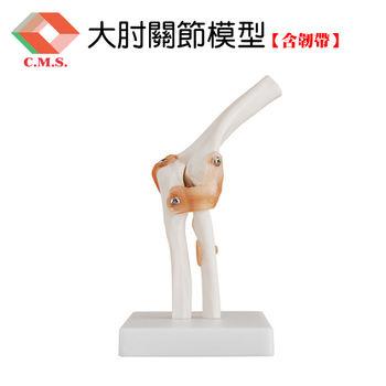 【宇祥國際】大肘關節模型含韌帶(YD112)