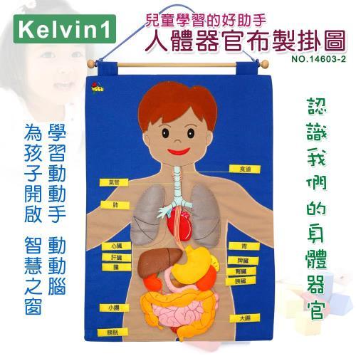 【兒童學習的好助手】人體器官布製掛圖No.14603-2