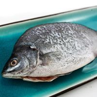 ~那魯灣~ 養殖澳洲寶石鱸魚2尾   20~25cm 250g~300g 尾