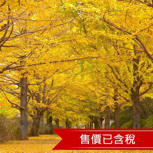 韓國楓遊南怡島石牆路時尚東大門明洞6日(含稅)