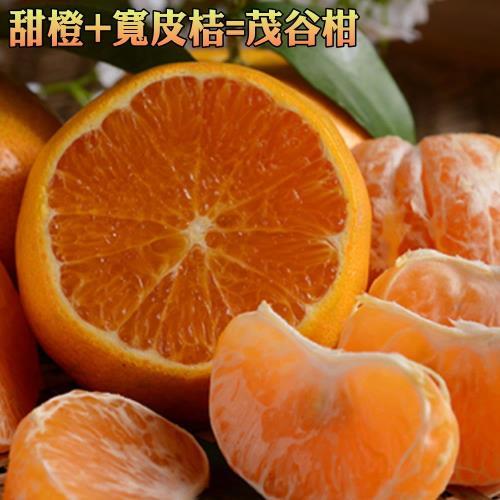 坤田水果  橙桔類的〝混血兒〞茂谷柑25A(3箱)單箱9斤30~33顆