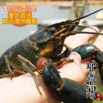 【那魯灣】產地直送鮮活澳洲龍蝦1台斤(8-10尾/台斤)