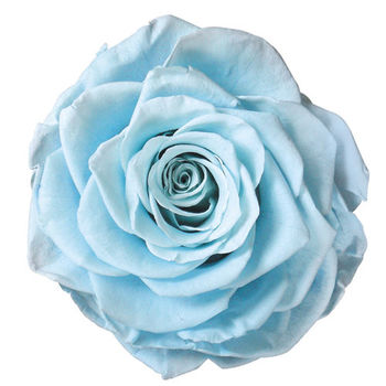 【Eternover永恆戀人】心戀情扉-不凋花(永生花)單入組-晴空藍