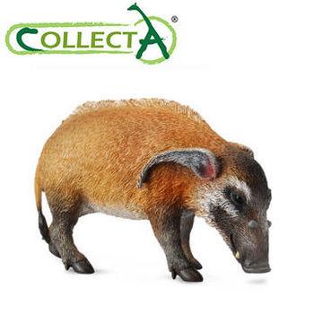 【CollectA】紅河豬