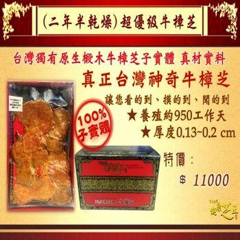 【百年永續健康芝王】牛樟芝/菇(二年半超優級) 乾燥品 (11g /1兩)
