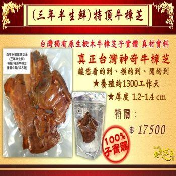 【百年永續健康芝王】牛樟芝/菇(三年半特頂) 生鮮品 (37.5g /1兩)
