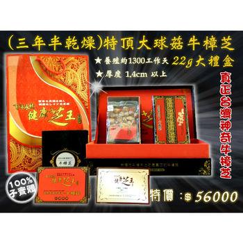 【百年永續健康芝王】牛樟芝/菇(三年半特頂大球菇) 乾燥品 (22g 大禮盒)