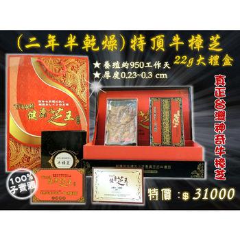 【百年永續健康芝王】牛樟芝/菇(二年半特頂) 乾燥品 (22g 大禮盒)