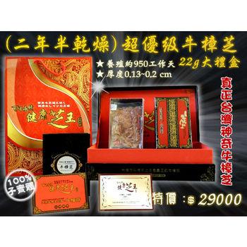 【百年永續健康芝王】牛樟芝/菇(二年半超優級) 乾燥品 (22g 大禮盒)