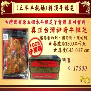 【百年永續健康芝王】牛樟芝/菇(三年半特頂) 乾燥品 (11g /1兩)