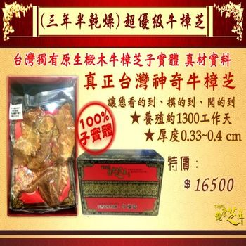 【百年永續健康芝王】牛樟芝(三年半超優級) 乾燥品/菇 (11g /1兩)