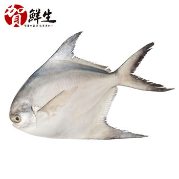 【賀鮮生】野生鮮嫩白鯧魚3尾(360g/尾)