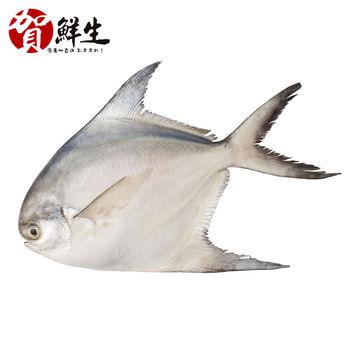 【賀鮮生】野生鮮嫩白鯧魚6尾(360g/尾)
