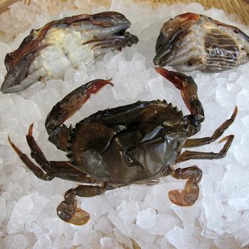 買一送一【台北濱江】生凍軟殼蟹1盒(8隻裝/盒  共2盒)