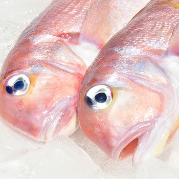 [漁季]極鮮馬頭魚超值美味組