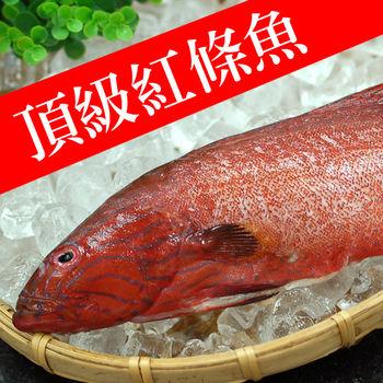 【築地一番鮮】峇里島野生紅鰷石斑魚4條(350g±50g)免運組