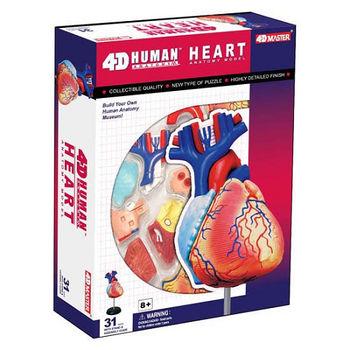 【4D MASTER】人體透視-心臟 26052