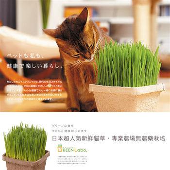 【買達人】GREEN Labo DIY新鮮寵物食用貓草-燕麥草(4入)-限時加碼送貓抓板*1