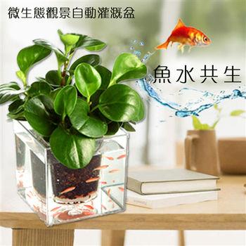 【買達人】免澆水創意微生態觀賞用自動盒(贈魔法魚)-2入