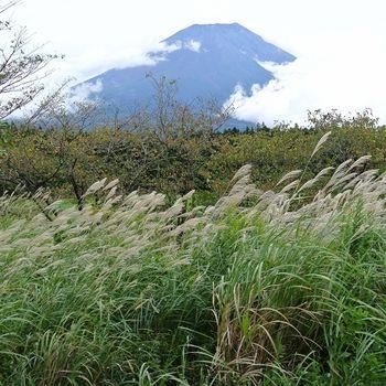 【香草航空】日本東京自由行5日-淺草微笑+富士山中湖