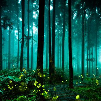【年末指定日出發】甜蜜沙巴浪漫夜遊瑩河+美麗七彩珊瑚+雨林漫遊沙巴5日
