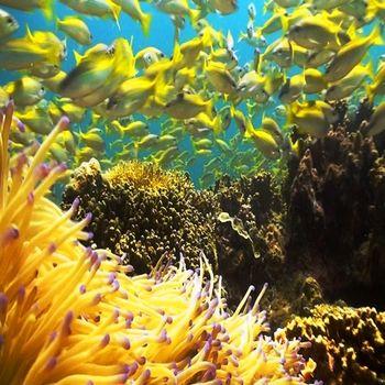 【早鳥春遊踏青去】嗨翻沙巴~紅樹林.長鼻猴.海洋渡假五日