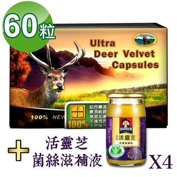 【瓦特爾】紐西蘭鹿茸60粒 ((贈:桂格活靈芝滋補液60ml*4瓶)