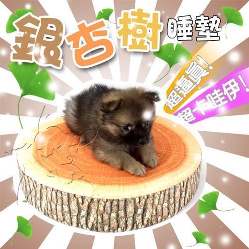 【寵物大本營】寵物水果睡墊(銀杏樹)