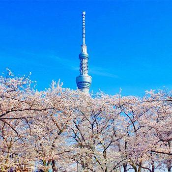 【櫻花季】日本東京酷航淺草微笑酒店自由行五日
