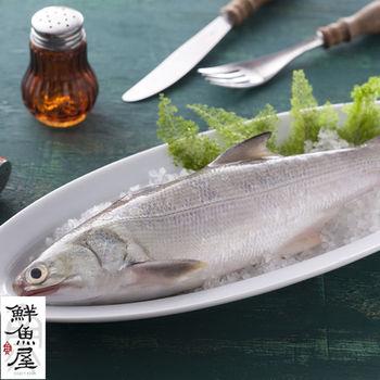 【鮮魚屋】現流急凍台灣肥美午仔魚*8條