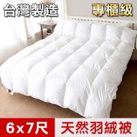 【凱蕾絲帝】台灣制造~專櫃級耐寒5℃100%純天然羽絨被-雙人6*7尺