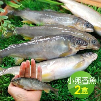 築地一番鮮 宜蘭帶卵小香魚2盒(16尾裝/1kg/盒)
