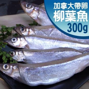 築地一番鮮 加拿大帶卵柳葉魚6包(約300g/包)