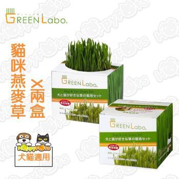 【GreenLabo】DIY貓咪燕麥草(2包)