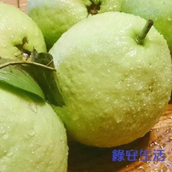 【綠安生活】燕巢牛奶珍珠芭樂1盒(6斤/12-14粒/盒)