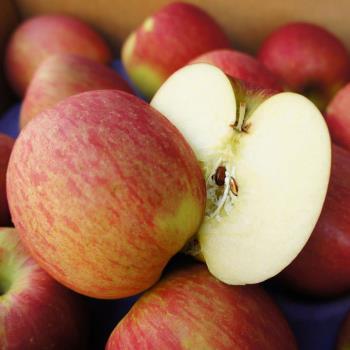 築地一番鮮 特大美國華盛頓富士蘋果1盒(2.5kg/禮盒/7-9顆)