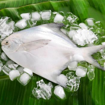 华得水产 鲜嫩野生白鲳鱼8件(300-400g/尾)