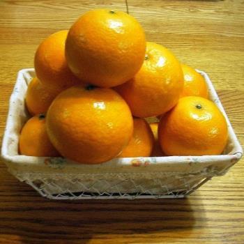 【綠安生活】吉園圃帝王柑1盒(5斤/盒/23A)
