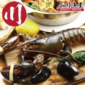 小川渔屋 金牌高压活冻波士顿龙虾4尾(650g/尾)