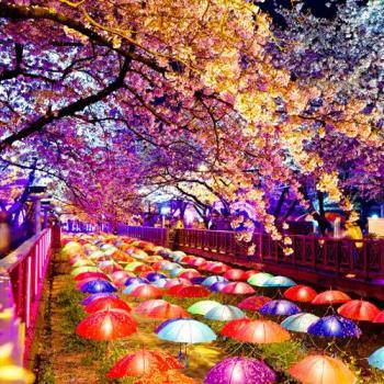 雙人-韓國春櫻花開五星海鮮吃到飽五日旅遊