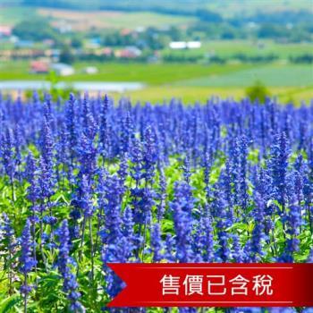 暑假-北海道留壽都渡假村.富良野薰衣草.單車漫遊5日(含稅)旅遊