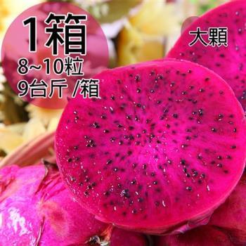 一等鮮 紅肉火龍果原裝箱1箱8~10粒/9台斤/箱
