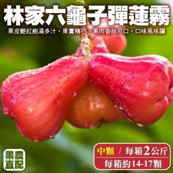 果農直配-六龜子彈蓮霧中顆1箱(14-17入/2kg/箱)
